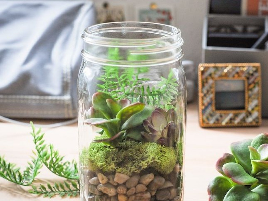 Mason Jar Terrariums